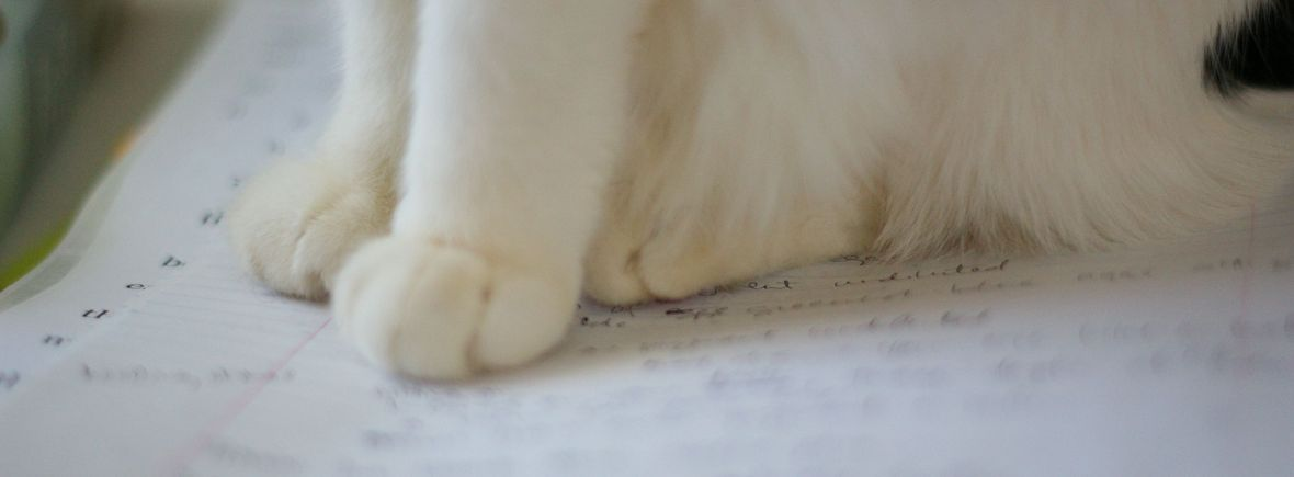 cat paws on notebook