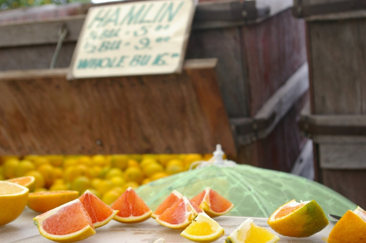 orange samples at Marshall Groves